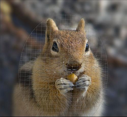 IMAGE: http://www.outbackphoto.com/CONTENT_2007_01/section_workflow_basics/20080527_FocalPoint_10/JPEGS/FocalPoint_Blur.jpg