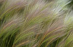 Monolake Grass 2002